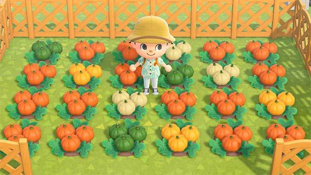 あつまれどうぶつの森 かぼちゃ