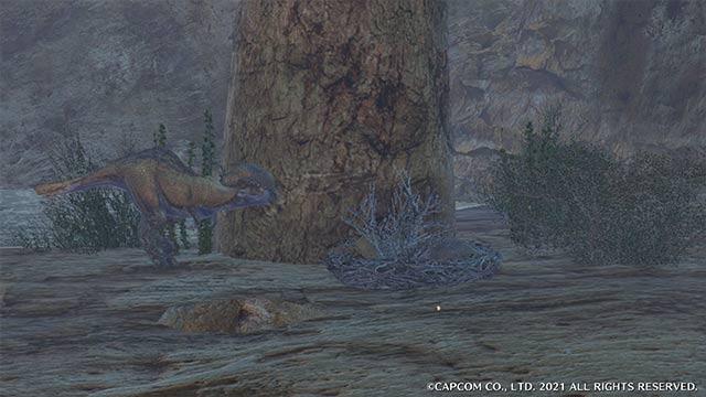 モンハンライズ 草食竜の卵 草食竜の巣