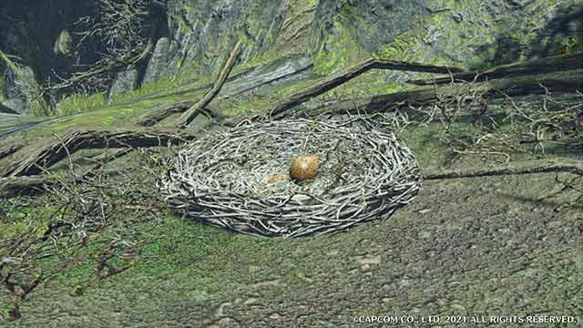 モンハンライズ 竜の卵 竜の巣
